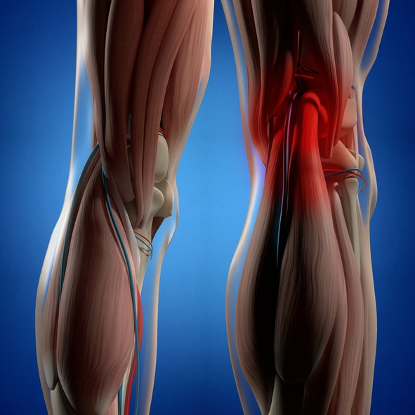 anatomy behind the knee