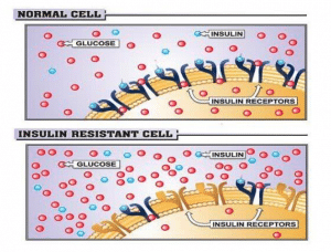 WHy is insulin resistance harmful