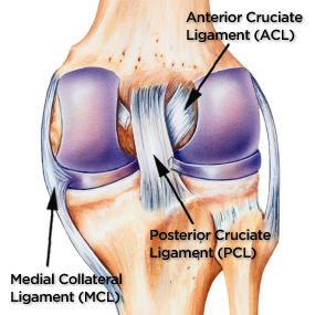 PCL Injury Anatomy