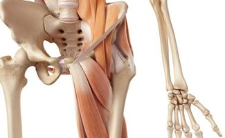 groin pain running adductor strain