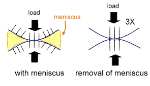 Function of meniscus