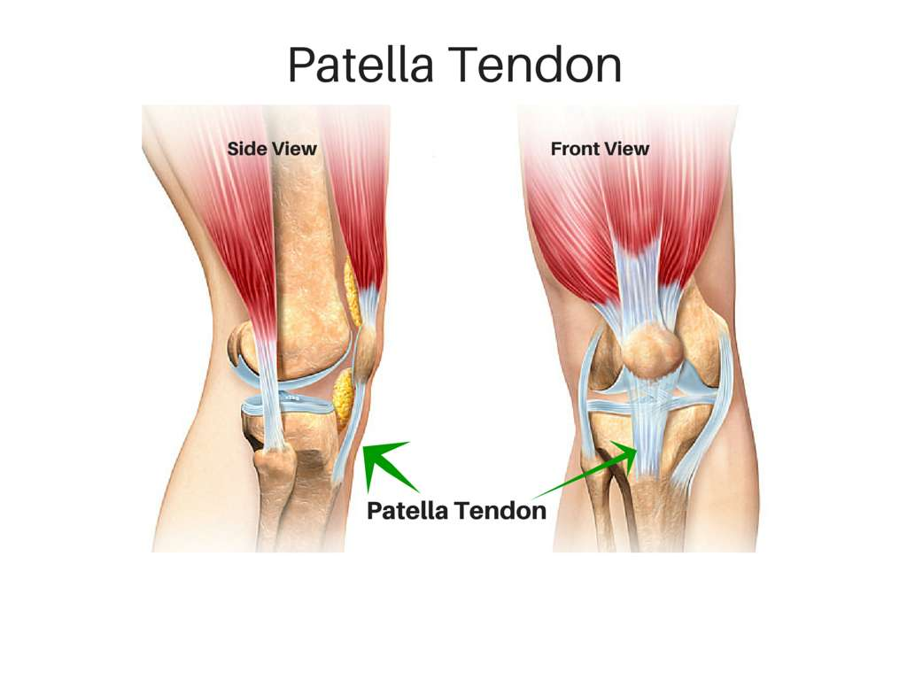 Patellar Tendon Tears Howard J Luks Md