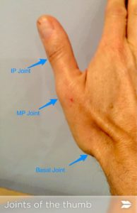 ligaments functions Thumb and